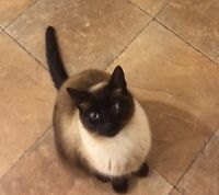 Missing kitty from Acreage.