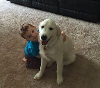 Dog and Cat Sitting/Boarding and Daycare