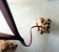 "Loop Leather Leash 45"", New...For Small Dogs   No need for a co"