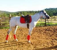 MUST SELL!!Proven Broodmare and wonderful ridding / trail horse