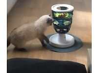 Catit Cat Kitten Maze Toy Boredom Breaker
