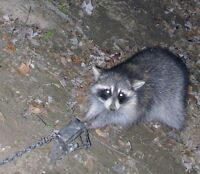 Pest control/Nuisance trapping