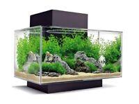 Fluval Edge 23l fish tank