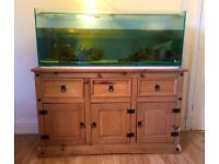 Large tropical aquarium setup plus turtles and fish