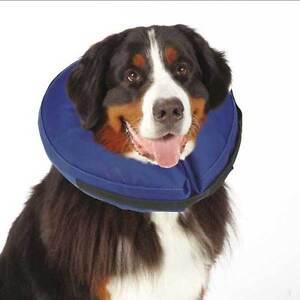 Dog Collar Alternatives