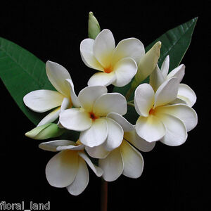 1X WHITE YELLOW ARTIFICIAL LATEX REAL TOUCH SILK WEDDING FRANGIPANI FLOWER STEM
