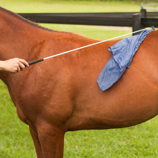 Horsemanship Flag