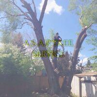 A S A P TREE SERVICE