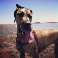 """""""Pooched Out"""" Dog Walking Services - Porters Lake/Eastern Shore"""
