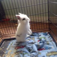 Beautiful young bunny needs home