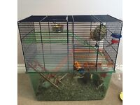 Gerbils with cage, food and loads of accessories