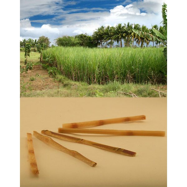 Sugar Cane Stir Sticks - Pack of 20 - Pure Raw Sweet Cocktail Drink Swizzle Rods