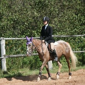 8 year old mare