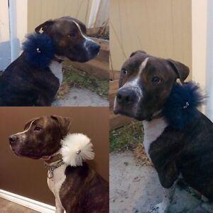 Handmade tutu's for kids, cats, dogs, collar accessories Edmonton Edmonton Area image 3