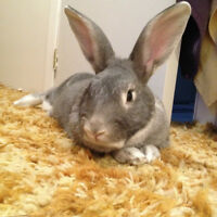 BUNNY RESCUE- Hi my name is Archer and i need a home