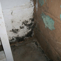 Mold and Waterproofing Services