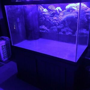150G Drilled Fish Tank for Saltwater/Freshwater