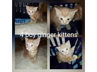 4 cute & loving friendly boy kittens for sale