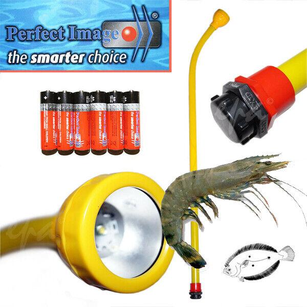 Sea Life - Prawn Flounder Gar Fish Sqiud LIGHT
