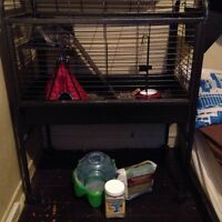 Chinchilla & Cage