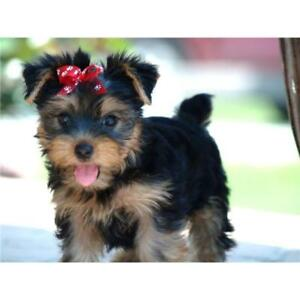 Small Doggy Full Grooming Only $35, Tx Inc.