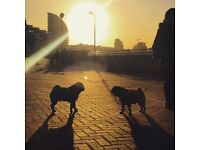 Dog walker Battersea, Clapham Common, Fulham,Chelsea areas.