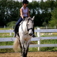 Horseback riding lessons &  training available NW of Calgary