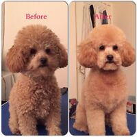 Experienced Certified Dog Groomer in Mississauga - Great Prices