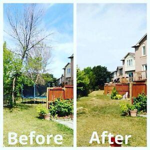 Tree Removal/Maintenance  Kawartha Lakes Peterborough Area image 6