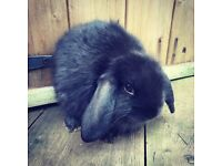 Loving homes wanted for Baby Rabbits
