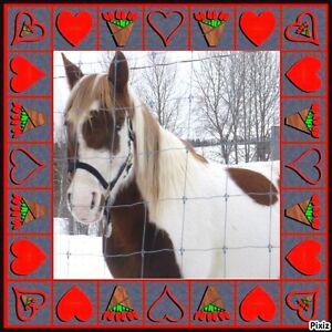 2 Magnifiques Paint Horse 1 Mâle 1 Femelle yeux bleus