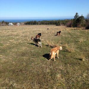 """Dogs On The Farm"" Dog Boarding"