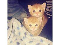 Kittens ready 4/5 weeks