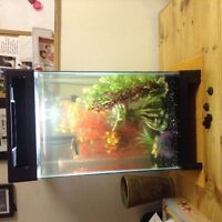 Fish with 15 gallon tank and accessories