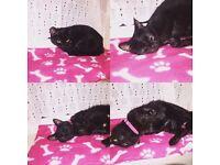 Cat bella
