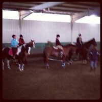 Experienced riding coach/instructor seeks employment