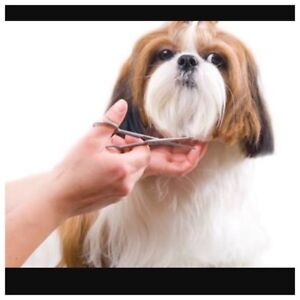 Dog grooming business in western australia gumtree australia free dog grooming courses training solutioingenieria Image collections