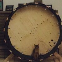 Awesome cat wheel