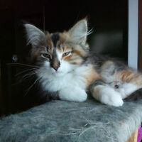Homeless Cats and Kittens for Adoption, Help Save a Life!!