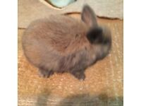 3 rabbits for sale