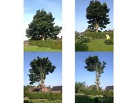 True Cut - Tree Specialist and Garden services (All Belfast and County Antrim area)