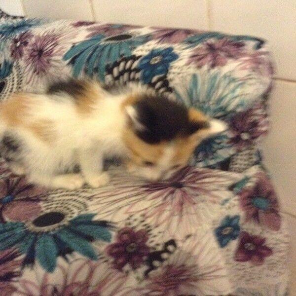 Lovely kittens to be homed