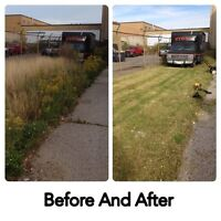 Overgrown Grass Cut/Small Tree and Shrub Removal and Prune