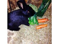 1 year old rabbit comes with everything!!!