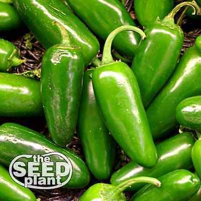 Jalapeno M Pepper Seeds 100 SEEDS NON-GMO Pepper 100 Seeds
