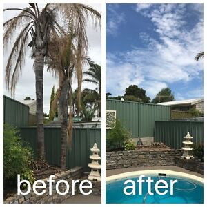 Palm removal Paralowie Salisbury Area Preview