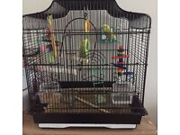 Budgies and cage with full setup