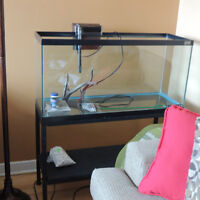 35 gallon aquarium