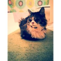 """Cute and loving cat looking for a good home**** FREE**""""*"""