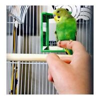 Birds - Green/Blue Parakeets :) with cage and accessories!